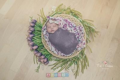 Wheaton, IL  Family + Newborn Photographer | Alicia