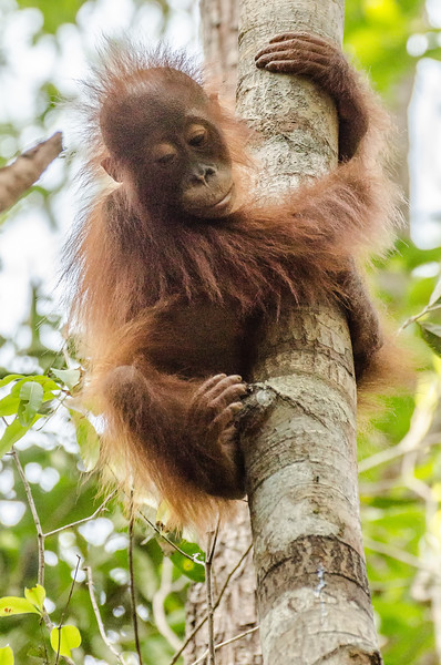 Borneo-2283.jpg