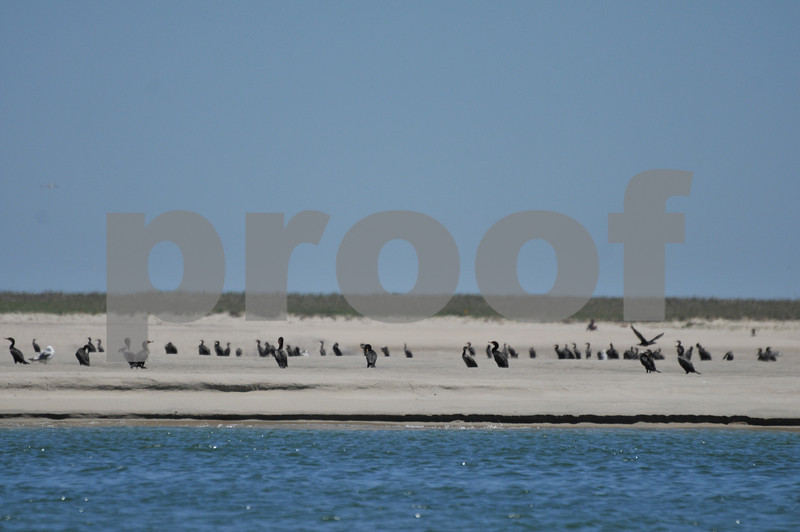 Pictues from cape and father day 033.JPG