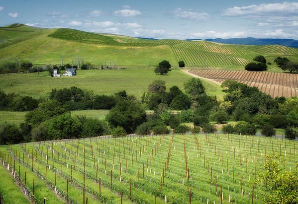 Napa Valley - Artesa Vineyards