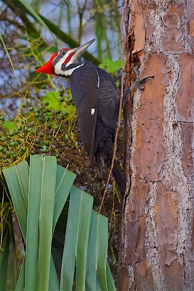 Florida Nature 2017