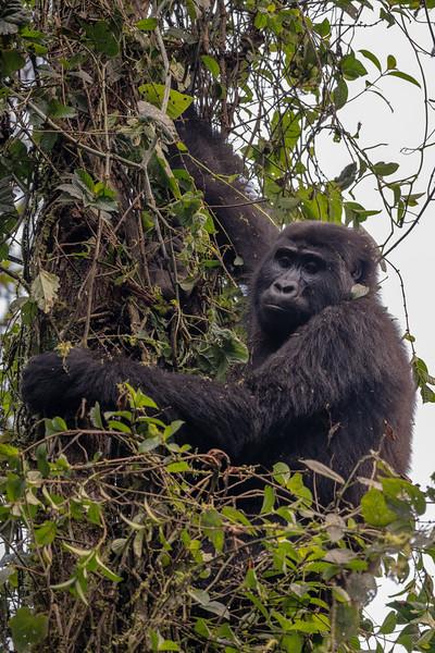 Uganda_T_Gor-1653.jpg
