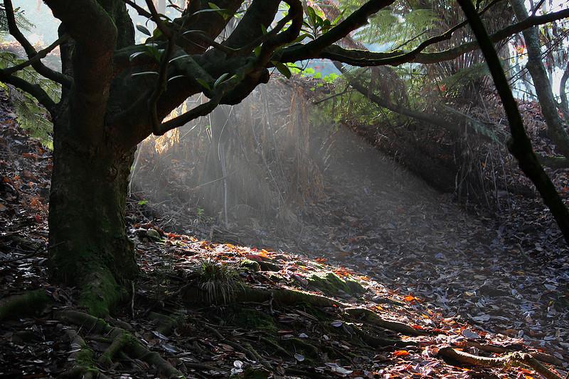 Woodland spotlight.jpg