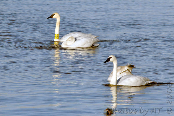 2006-12-09 Riverlands Migratory Bird Sanctuary