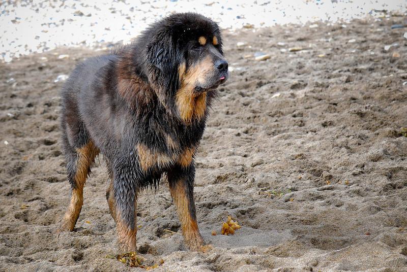dogs_beach-042.jpg
