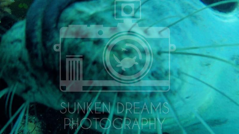 Lundy Island Edit.Still085.jpg