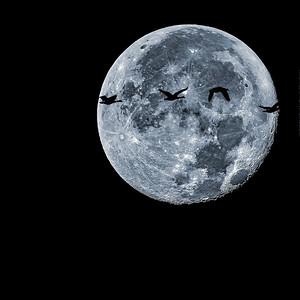 """Night Flight"" (photography) by John Diephouse"