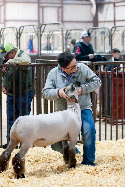kay_county_showdown_sheep_20191207-97.jpg