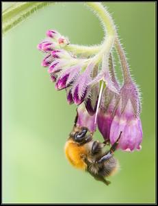 Bijen,wespen en mieren