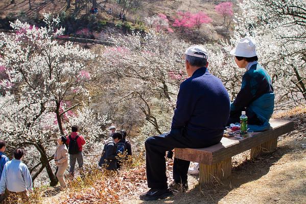 Springtime in Japan 2013