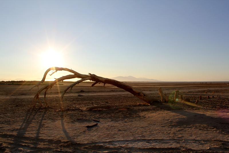 04 The Salton sea (83).JPG