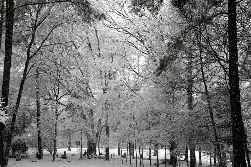 snow_o1_2018_002.jpg