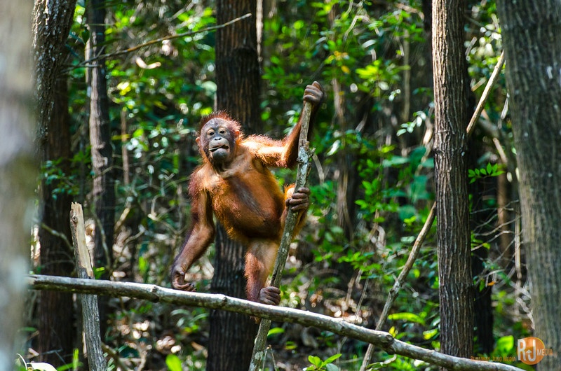 Malaysia-Rasa Ria Shangri La-Kota Kinabalu-7580.jpg