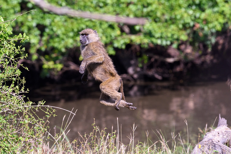 20160212_0389_Serengeti_Day_4-3.jpg