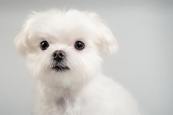 Paw Print Pet Portraits