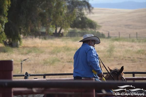 2017 Daulton Ranch Shipping