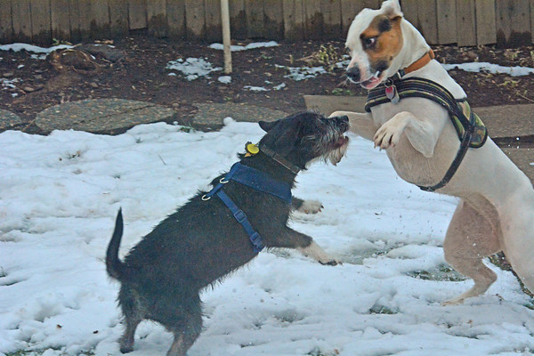 Tessy Welcomes Nelly for a Back yard Brawl : 1-19-2020