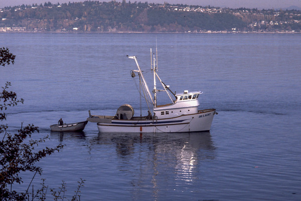 Purse Seining for Salmon off Glen Acres Vashon Island 1980