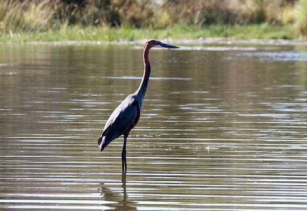 Kruger National Park 2012 - South Africa