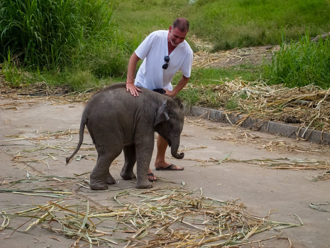 The Baby Thai Elephant Really Was Playing Like a Huge Puppy