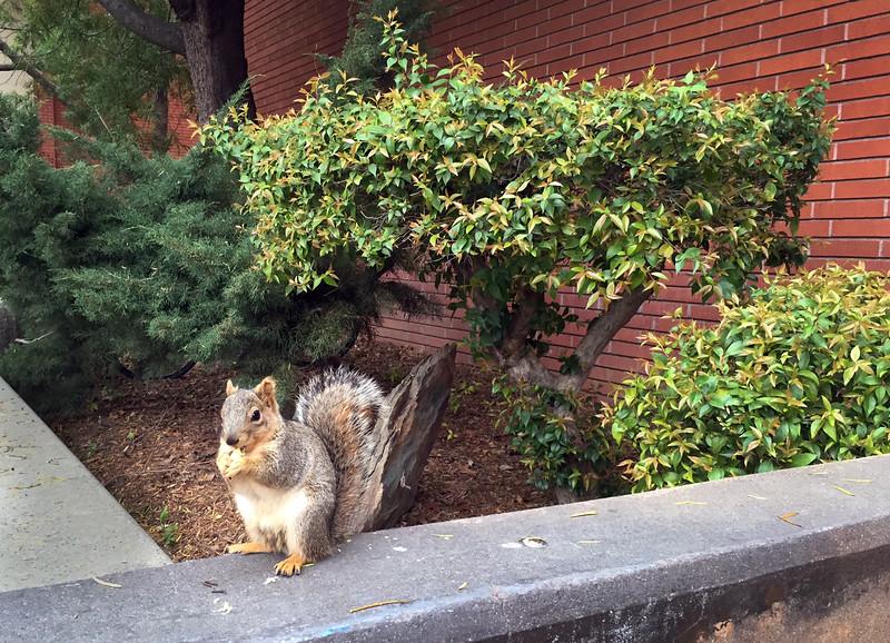 mohr squirrel.jpg