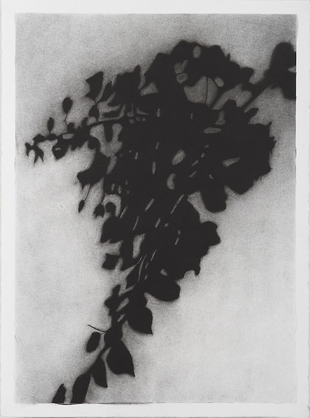 Shadow Leaves #2