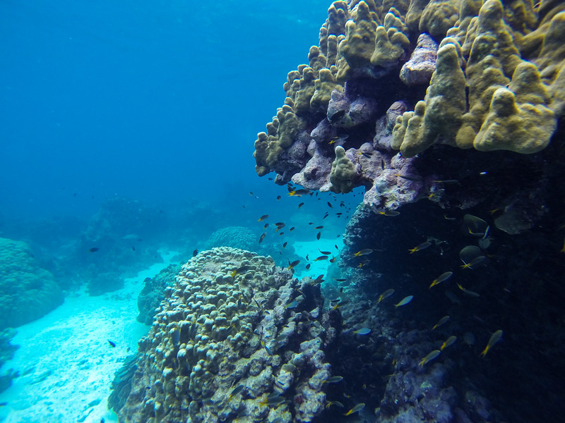 Tachai Island snorkeling