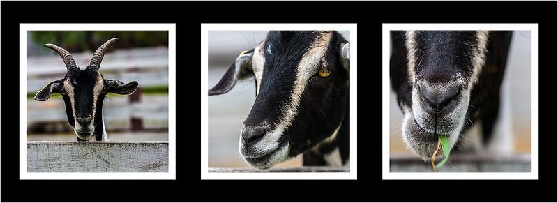 an17-S12-Animal-2.jpg
