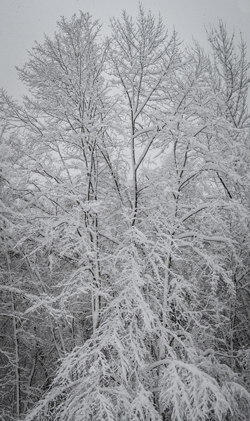 November 2018 Snowfall-_5009223.jpg