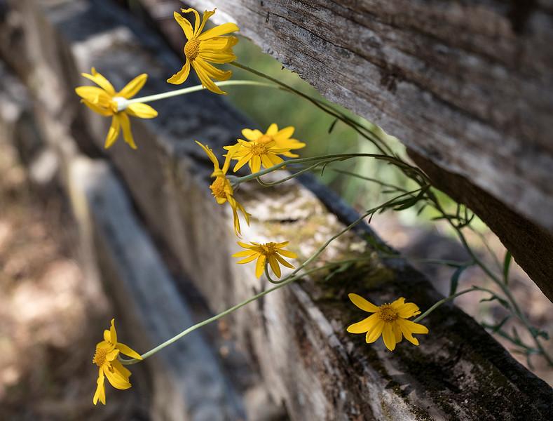 wildflower fence.jpg