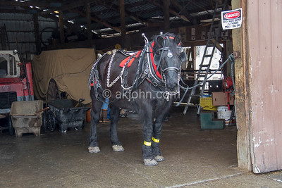 HORSE DRAWN CARRIAGE COMPANY TRAINING