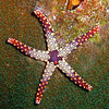 red purple star square