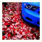 Hot leaves, cool car