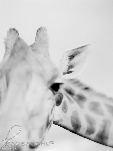 Safari-Africans-141.jpg