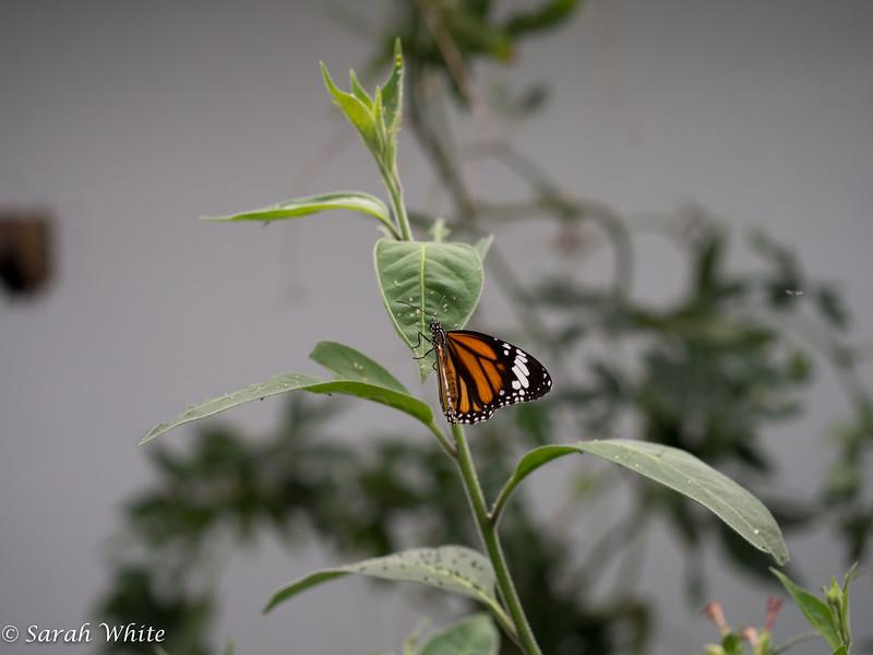 140503_ButterflyHouse_245.jpg
