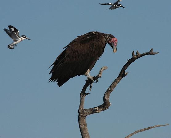 Southern Africa-Birds