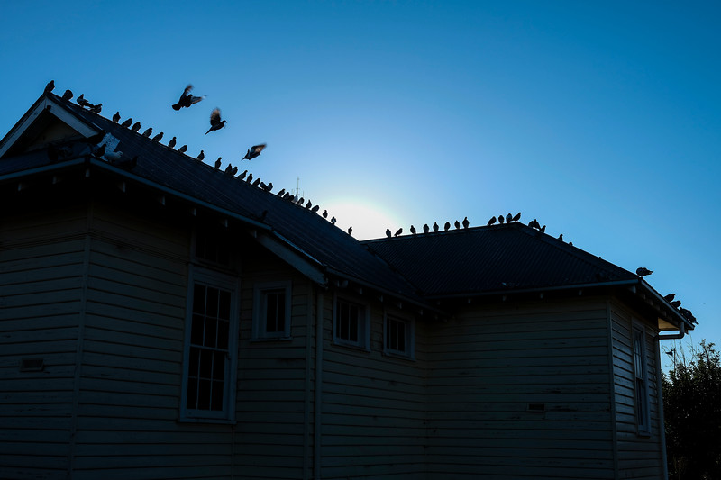 Pigeons sit along the roof line on the former Sea Lake court house, Mallee region, Victoria