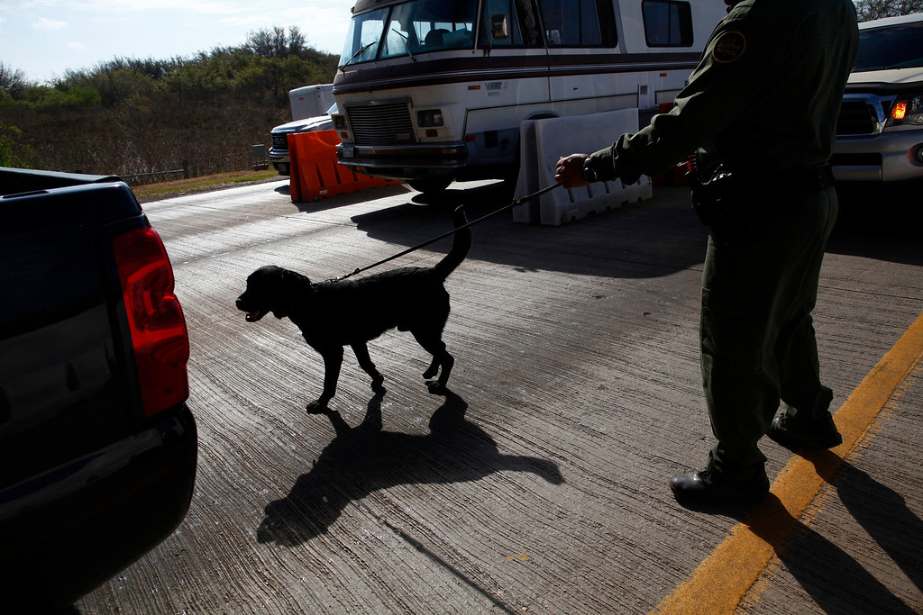 ". A U.S. Border Patrol agent checks cars at the Falfurrias checkpoint, near Falfurrias, Texas March 29, 2013. Located about 70 miles (113 km) north of the border, 5,000-7,000 cars pass through the checkpoint on a normal day, and 12,000 on holidays. Brooks County has become an epicentre for illegal immigrant deaths in Texas. In 2012, sheriff\'s deputies found 129 bodies there, six times the number recorded in 2010. Most of those who died succumbed to the punishing heat and rough terrain that comprise the ranch lands of south Texas. Many migrants spend a few days in a ""stash house\"", such as the Casa del Migrante, in Reynosa, Mexico, and many are ignorant of the treacherous journey ahead. Picture taken March 29, 2013.  REUTERS/Eric Thayer"