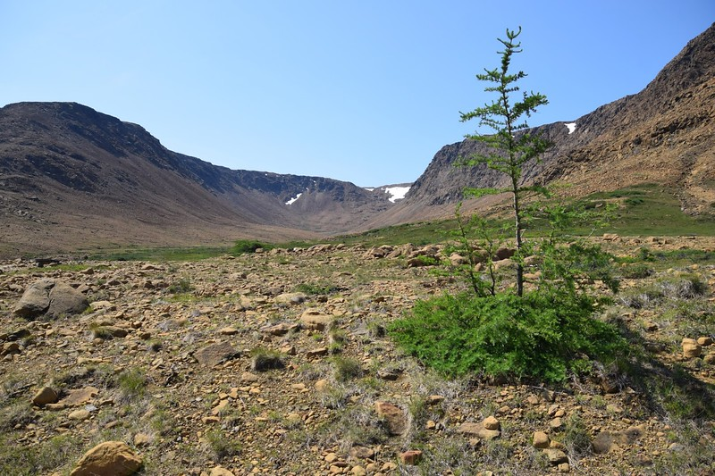 dry rocky landscape with single small tree