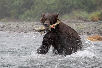 2018 Katmai Bears