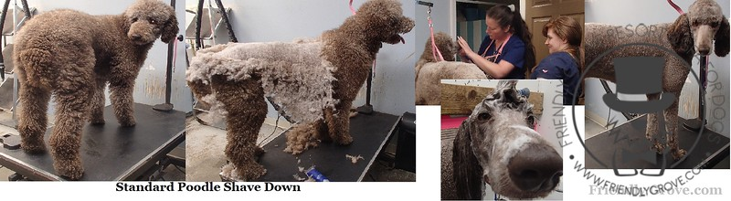 Before & After Grooming Pix