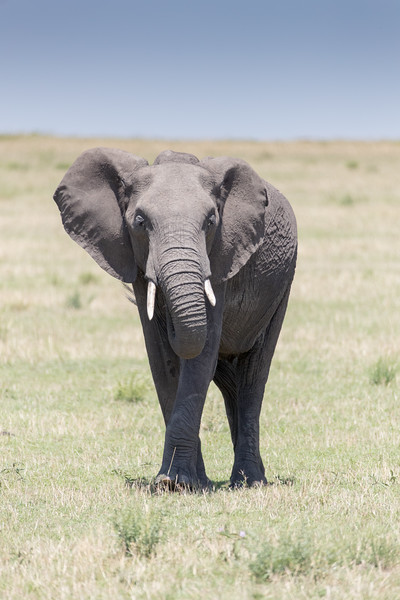 Africa - 101416 - 3311.jpg