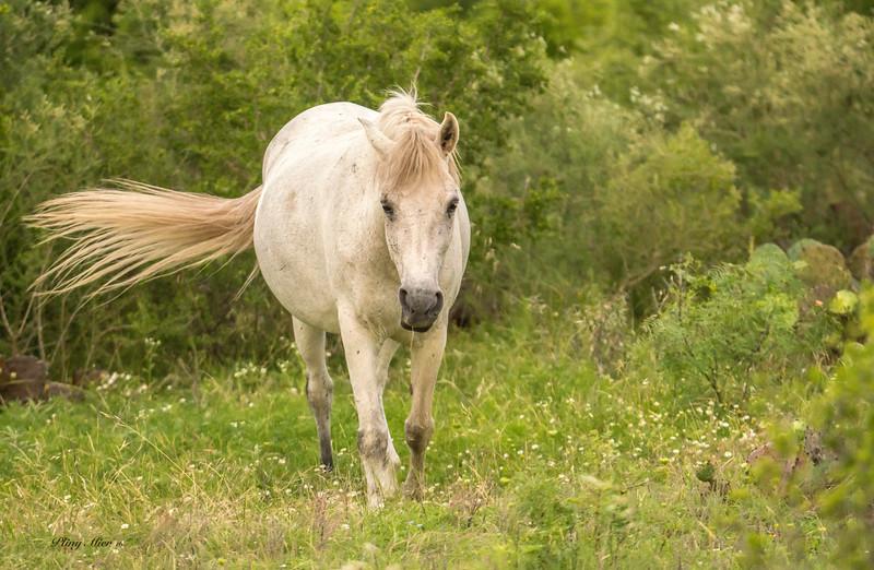 Horse 1_DWL9904.jpg