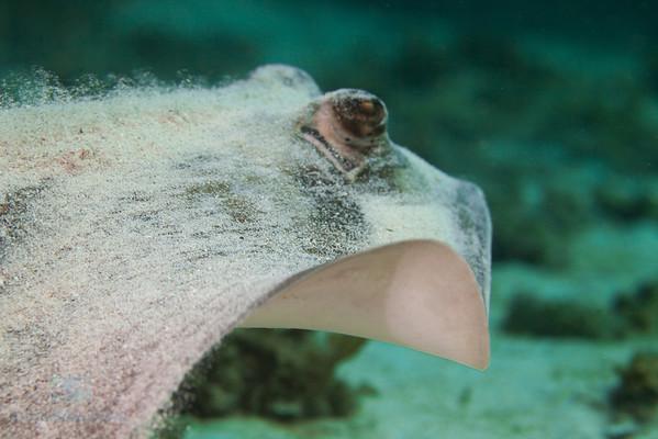 Mirbat Diving