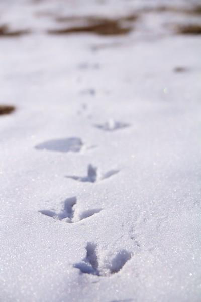 bokeh_footprints.jpg