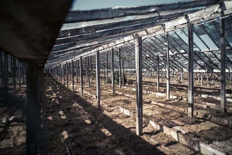 150223_The Rose Factory University Mound_8332.jpg