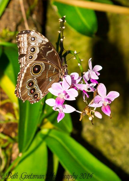 Cockerell Butterfly Center - Houston