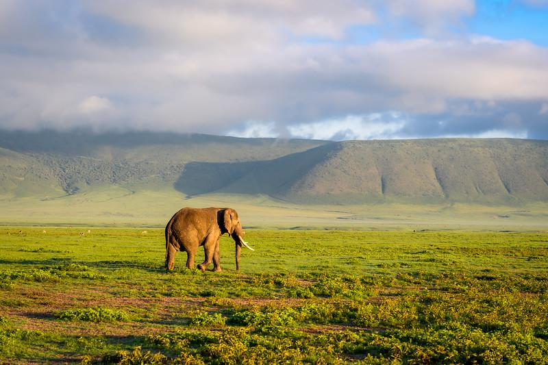 Male Elephant.jpg