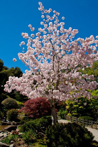 Hakone_Gardens-01.jpg