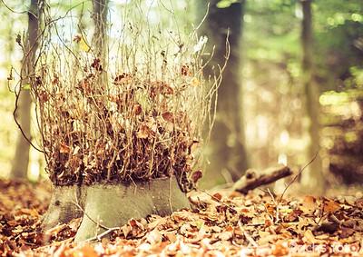 Efterårs farverne er på vej